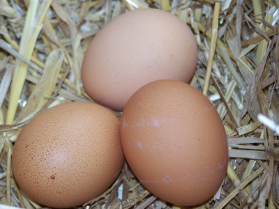 chicken eggs in straw nest